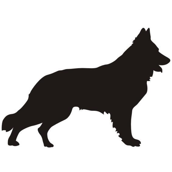 Schweizer Schäferhund