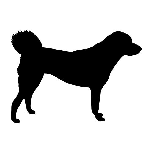 Anatolischer Hirtenhund Aufkleber