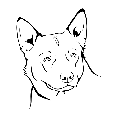 Australian Cattle Dog Wandtattoos