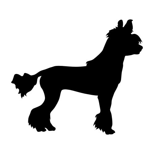 Chinesischer Schopfhund Aufkleber
