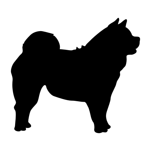 Chow-Chow Wandtattoos