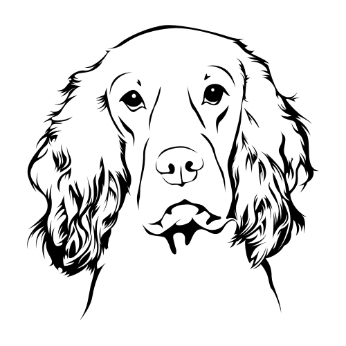 Cocker Spaniel Wandtattoos