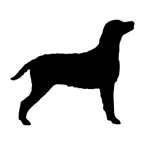 Curly Coated Retriever Wandtattoos