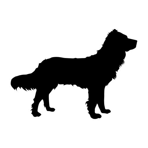 Deutscher Wachtelhund Aufkleber