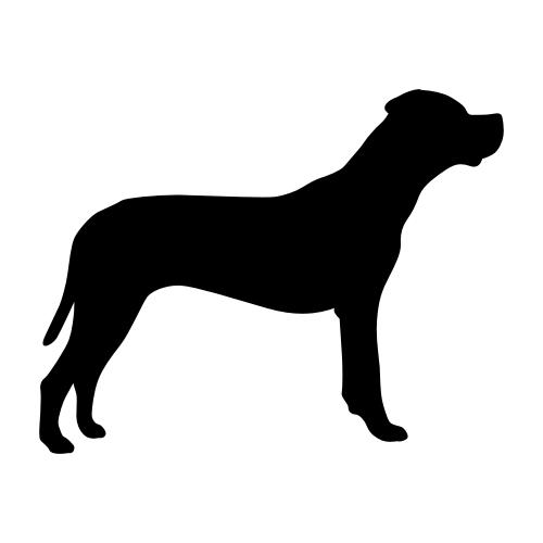 Dogo Argentino Bügelbilder
