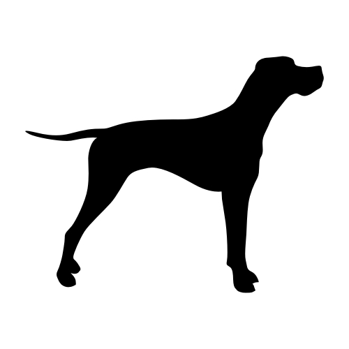 English Pointer Wandtattoos