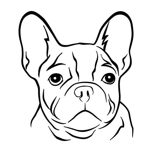 Französische Bulldogge Bügelbilder