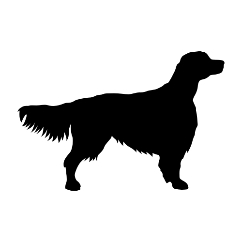 Irish Red & White Setter Wandtattoos