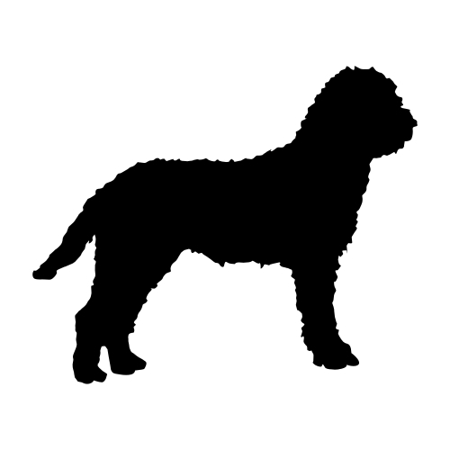 Lagotto Romagnolo Wandtattoos