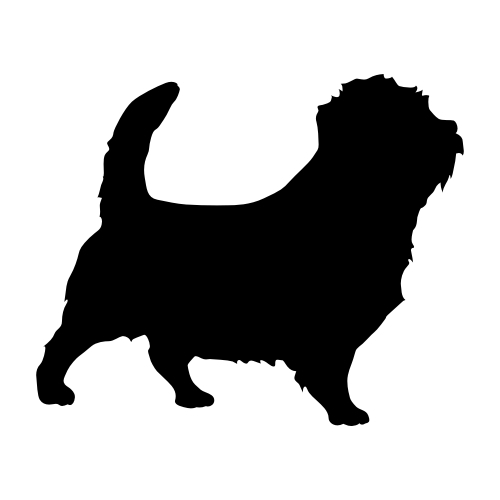 Norfolk Terrier Wandtattoos