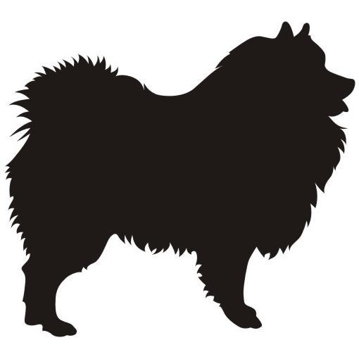Wolfsspitz / Keeshond