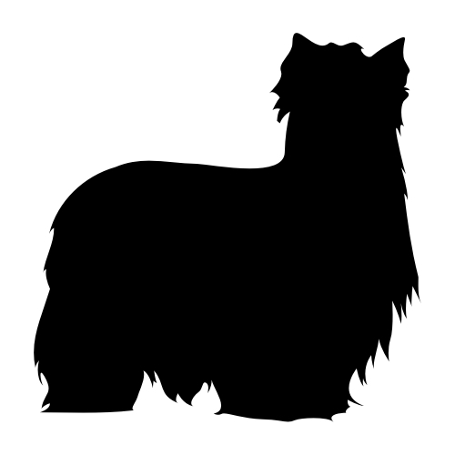 Yorkshire Terrier Wandtattoos