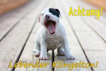 Anfalas.de | Hundeschild vom eigenen Foto