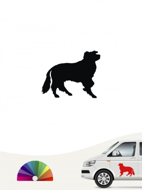 Border Collie Autosticker anfalas.de