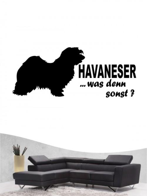 Havaneser 7 - Wandtattoo
