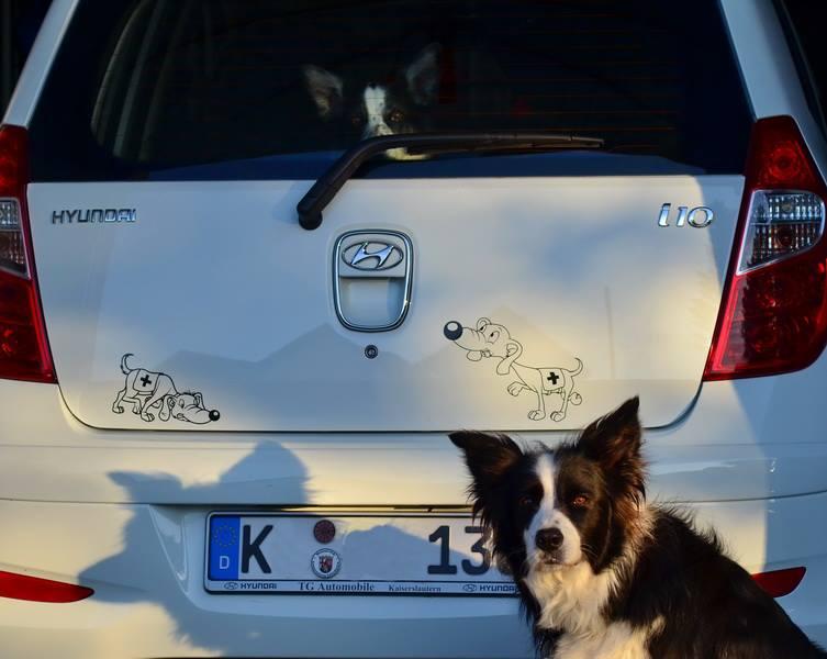 Mantrailing Hundeaufkleber Anfalas.de