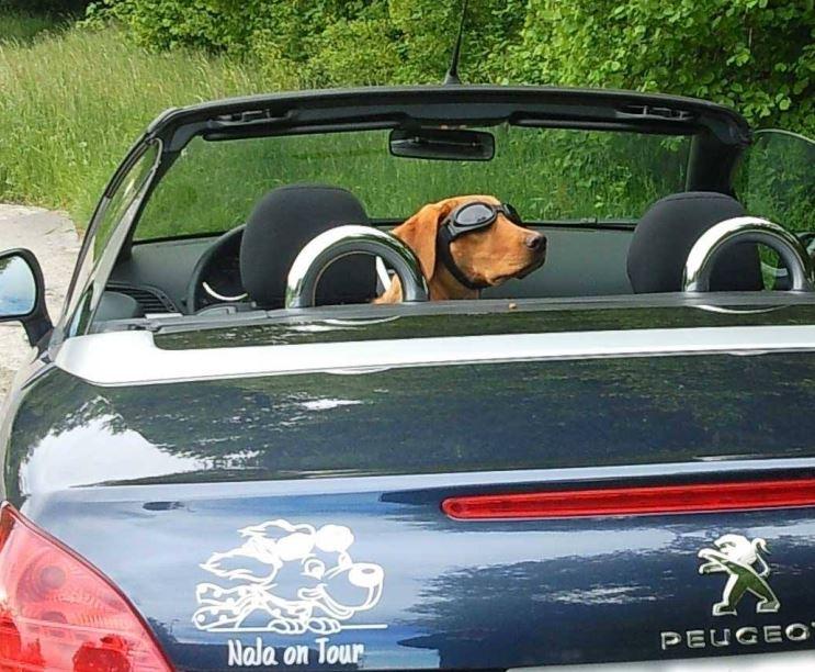 lustiger Hundeaufkleber Anfalas.de